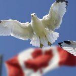 Canada chính thức thông qua Dự luật quốc tịch C-6