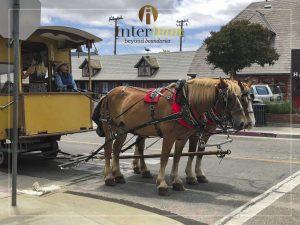 Những chú ngựa xinh đẹp với chiếc xe kéo sắc màu là hình ảnh thường thấy trên những cung đường thơ mộng của Solvang