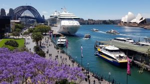 Đến thăm Circular Quay vào mùa xuân, bạn có thể vừa ngắm nhìn Cầu Cảng Sydney và nhà hát con sò, vừa tản bộ dưới bóng mát của hàng Jacaranda tím biếc.